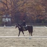 Alex (on Nike) riding dressage