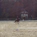Alexis (on Huey) riding dressage